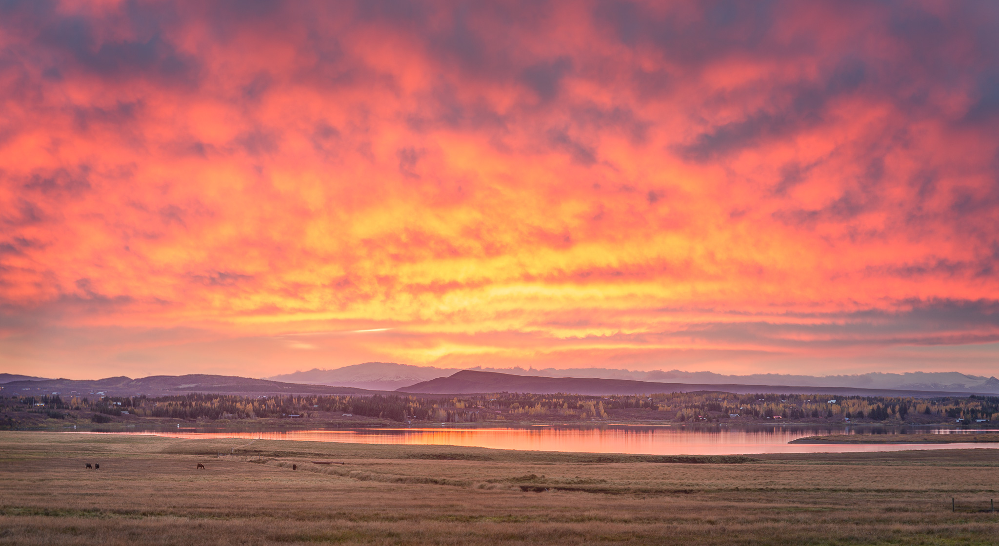 Sunrise over Icelandic pasture picture